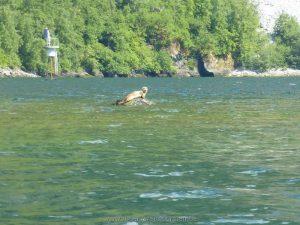 …offenbar .. auch Seehunde zuhause